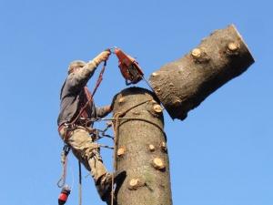 tree service santa barbara