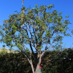 los angeles tree services