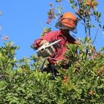 tree removal by licensed company