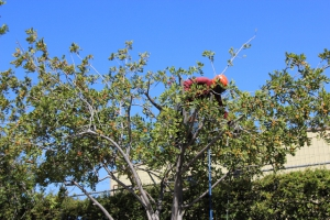 Professional Tree Trimming Los Angeles