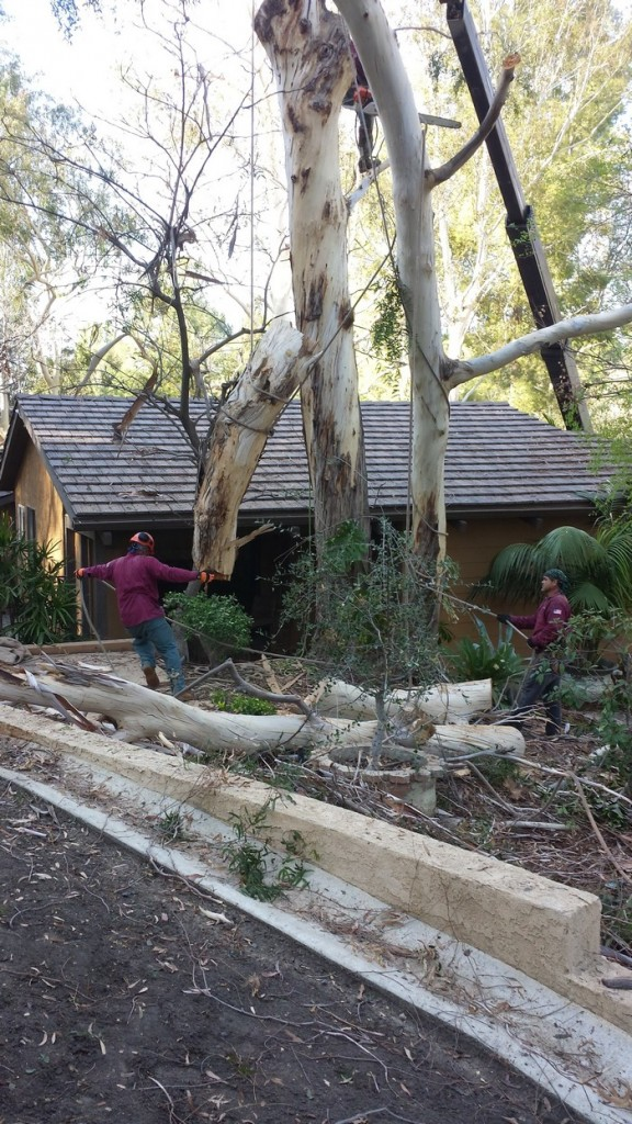 tree-trimming-agoura-hills