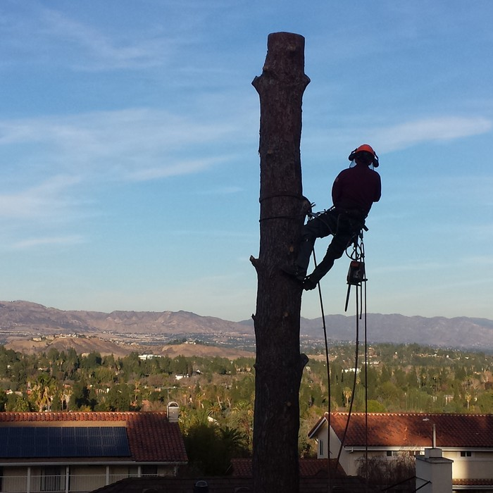 tree-trimming-sherman-oaks
