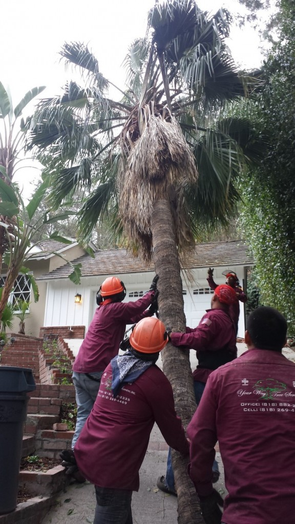 tree-trimming-thousand-oaks