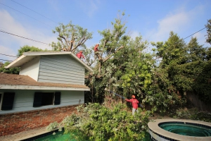 Tree Removal in Los Angeles