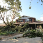 Tree Removal Los Angeles