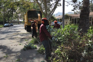 Tree Removal in Los Angles