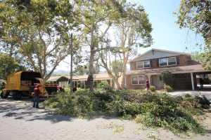 Tree Service in Los Angeles