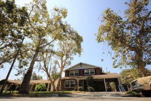 Tree Service in Los Angeles