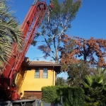 tree trimming los angeles ca