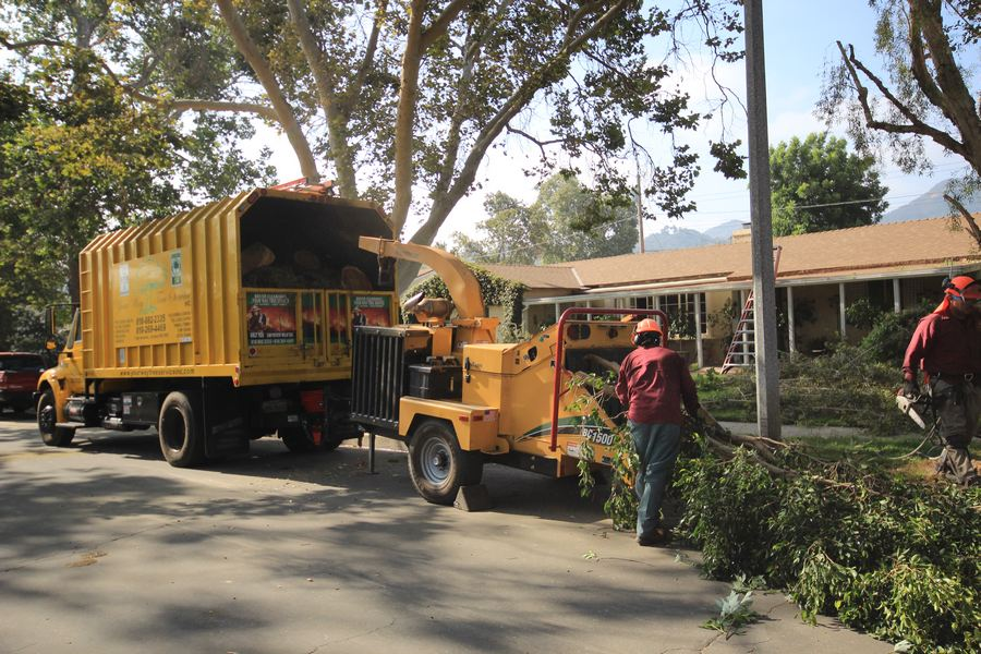 tree removal services near me