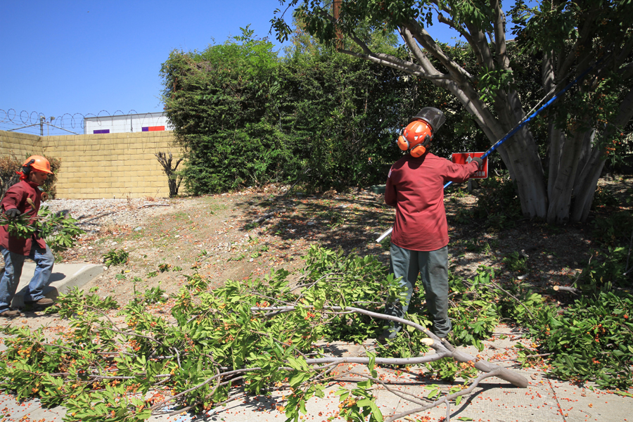 Weed-Abatement-in-Los-Angeles