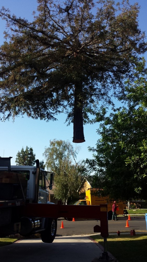 Licensed-Tree-Service-Company