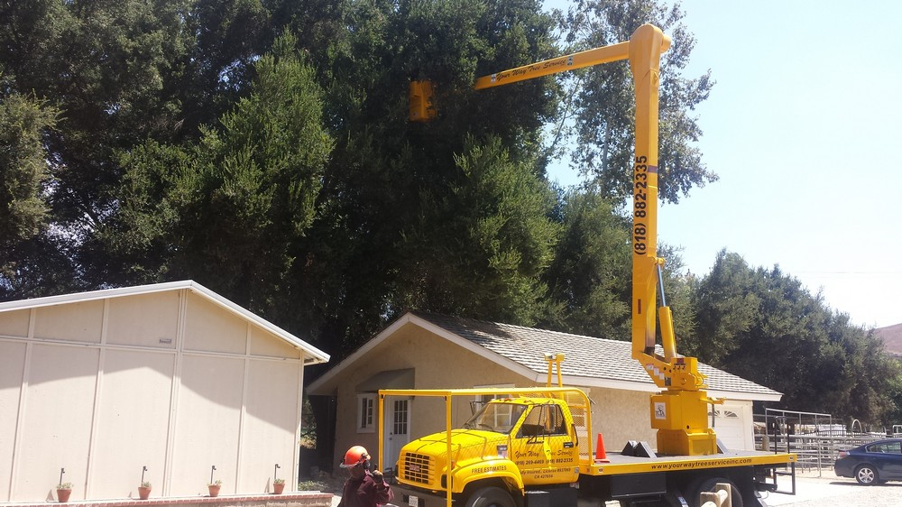 Affordable-Tree-Service-Company