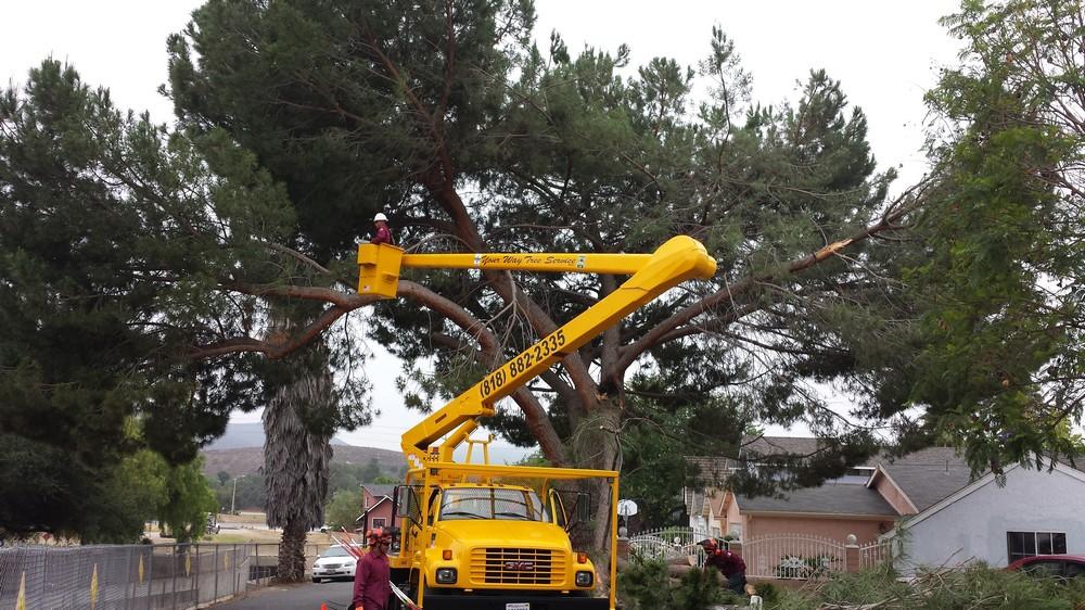 Licensed-Tree-Service