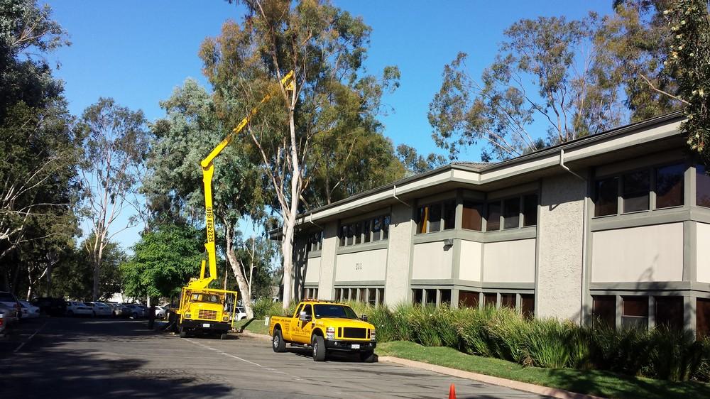 Los Angeles Fastest Tree Service Company