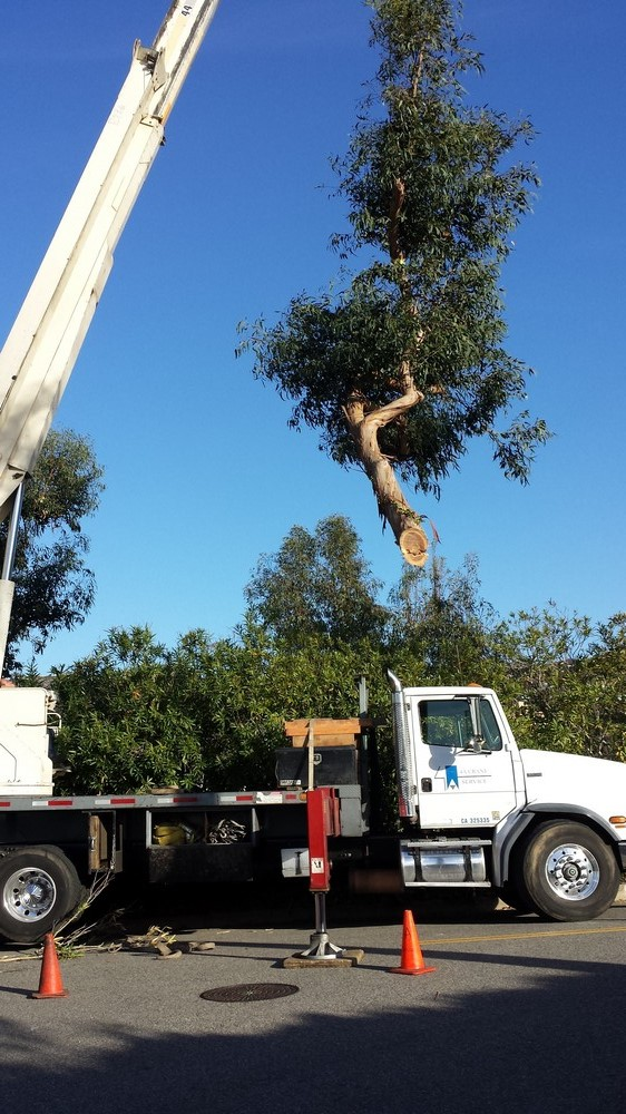 Tree Service Contractor Southern California