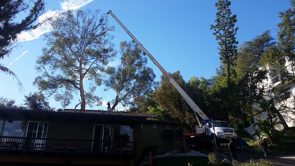 Professional Tree Pruning Company Services