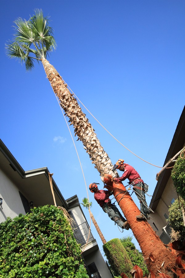 Licensed Tree Service