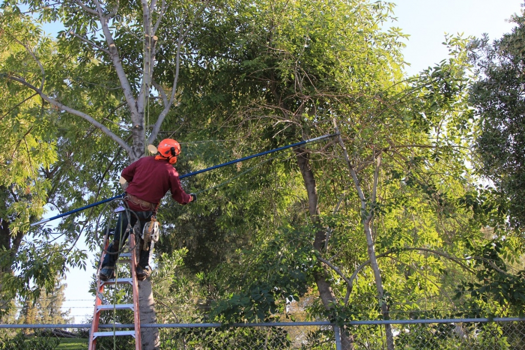 Professional Tree Removal in Los Angeles