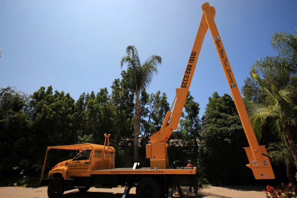 Tree Services Santa Monica