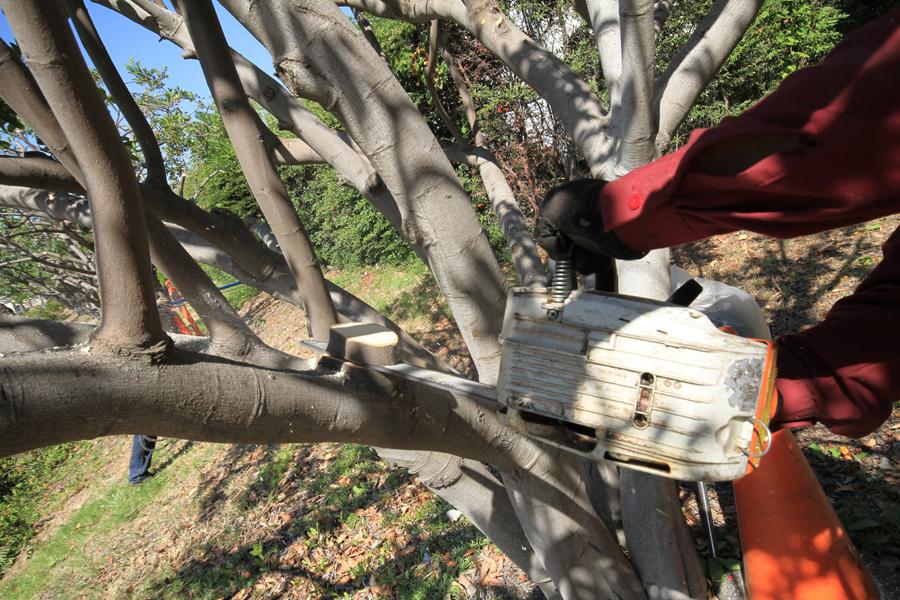 San Gabriel Tree Service Company