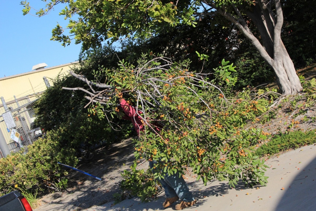 Affordable Tree Service Company in Los Angeles