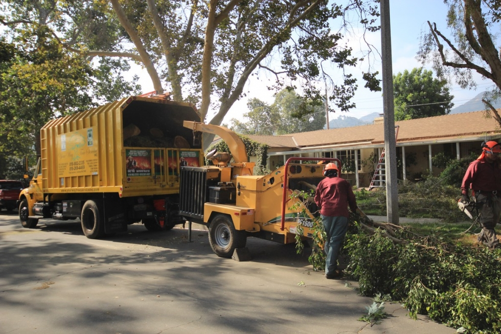 Tree Removal Contractor in Los Angeles