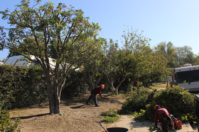 The Best Tree Service Company in Los Angeles