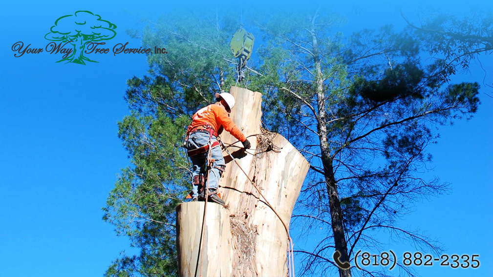 Call Experts Los Angeles Ivy Topping Removal