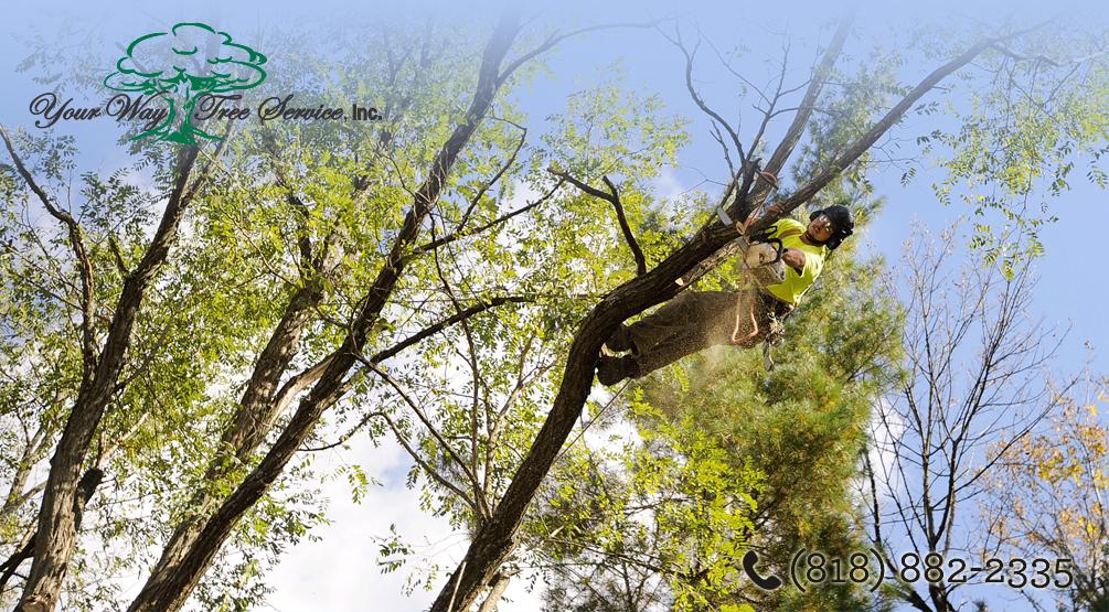 Benefits Tree Trimming San Gabriel Valley