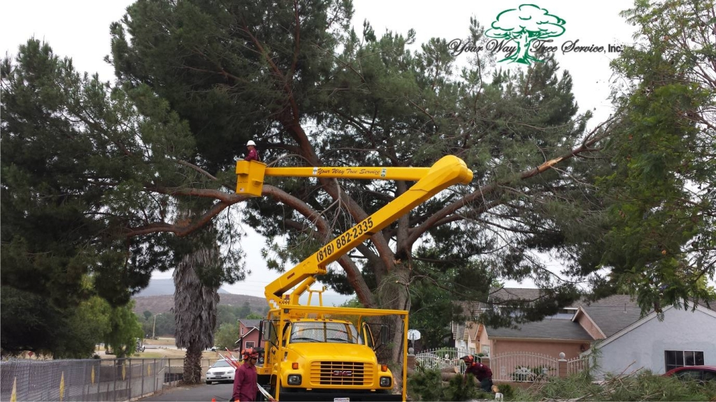 Tree Removal Bel Air