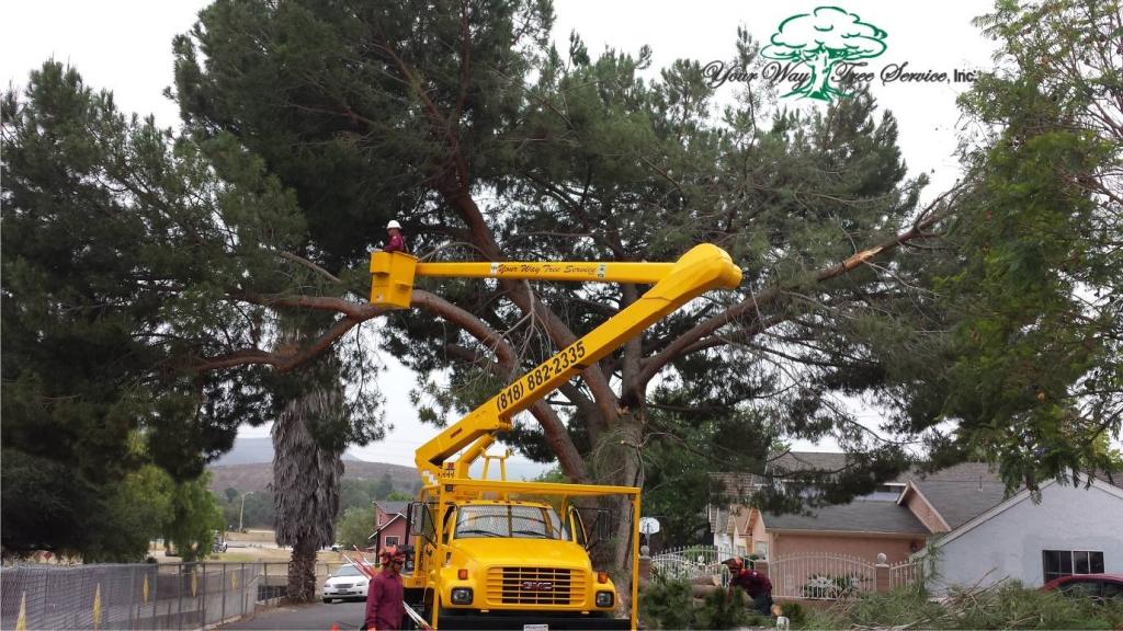 Tree Removal Bel Air