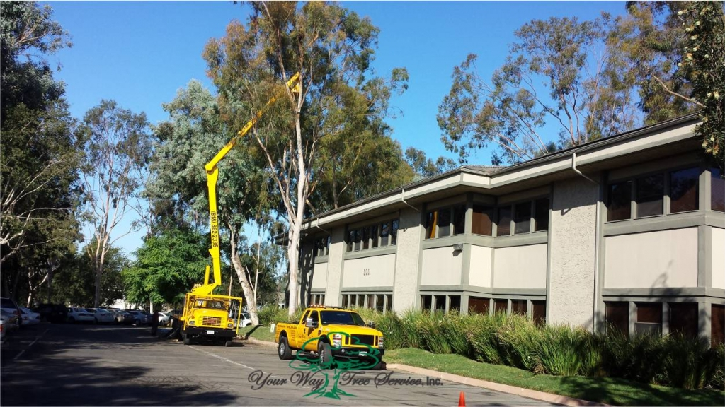 Tree Services Los Angeles