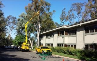 Tree Services Los Angeles