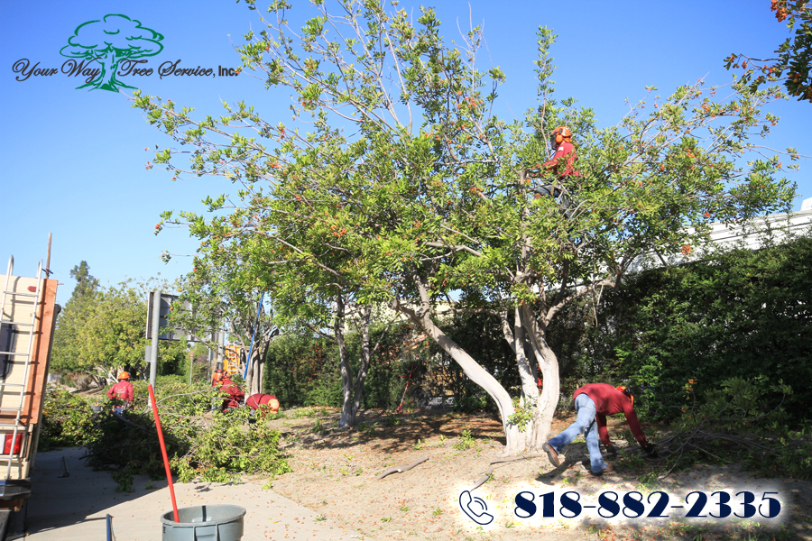 A Tree Service in Sherman Oaks Can Help Your Property