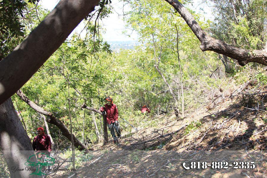 Hiring Tree Trimming in Hidden Hills