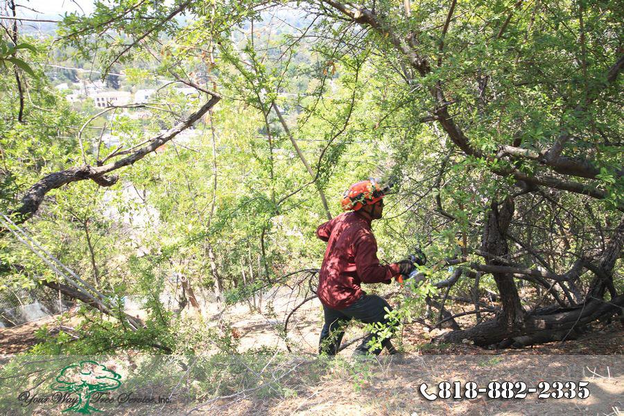 Trimming in Hidden Hills