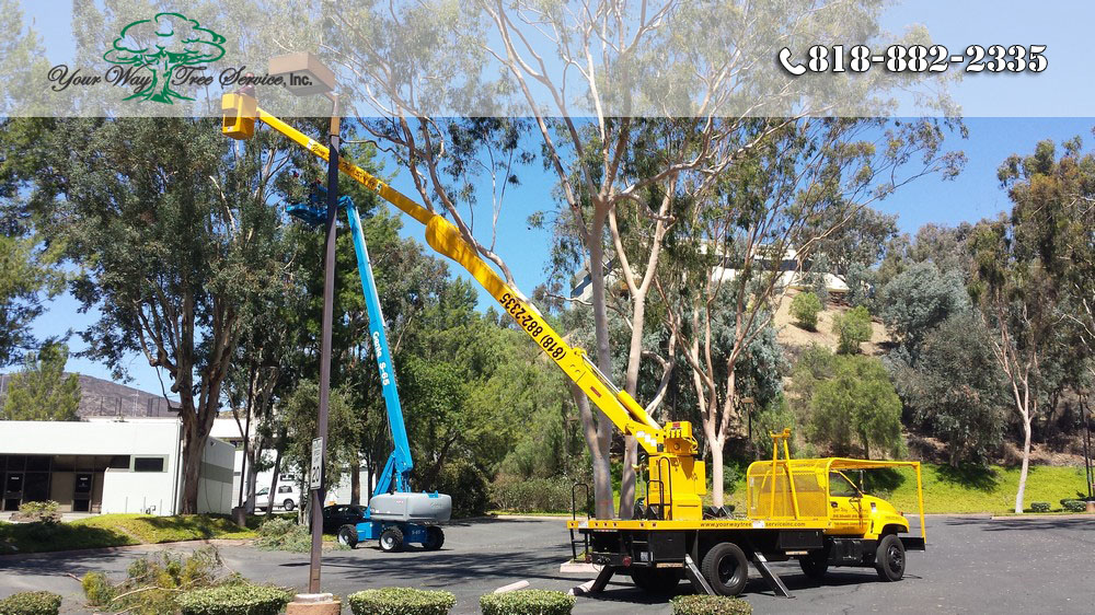 The Best Equipment for Tree Trimming in Valley Village