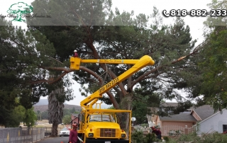 Best Equipment for Tree Trimming in Valley Village