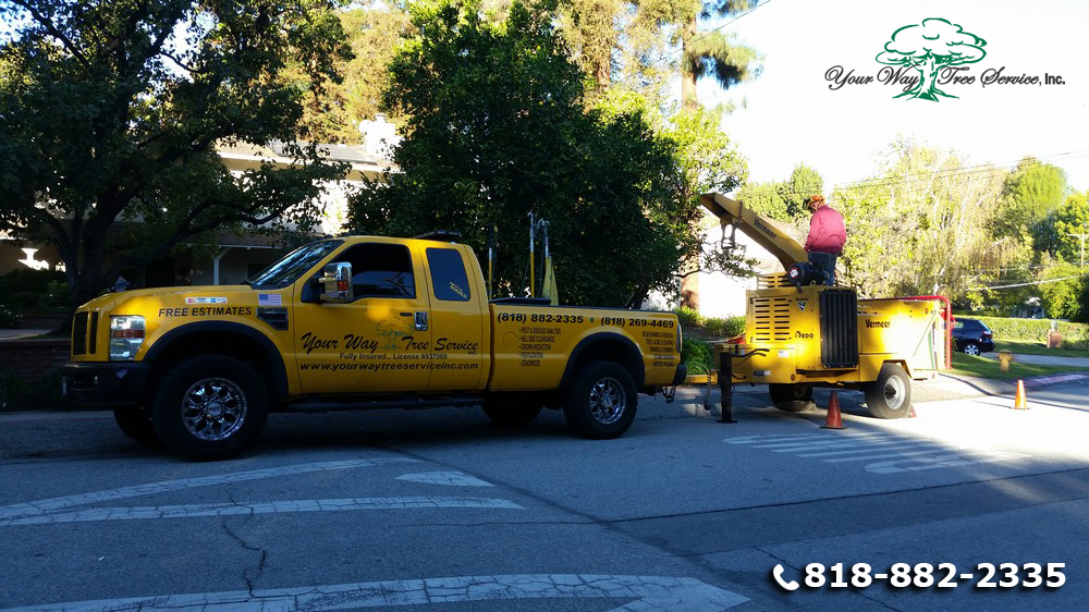 Use a Local Tree Service in Hidden Hills