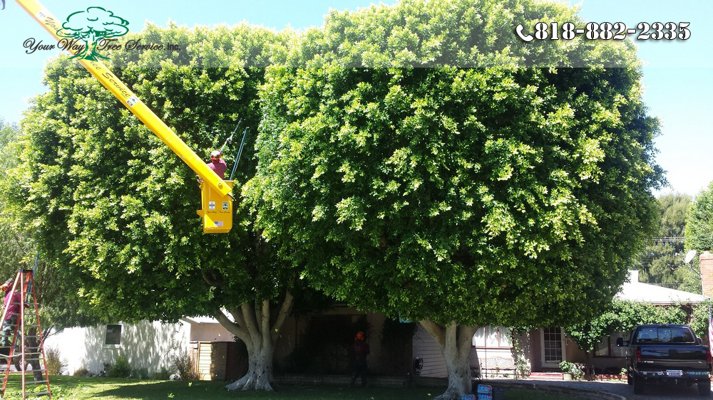 What is Important about Tree Trimming in West Hills