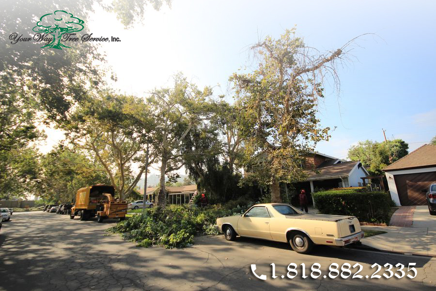The Benefits of a Professional Tree Service in Hidden Hills