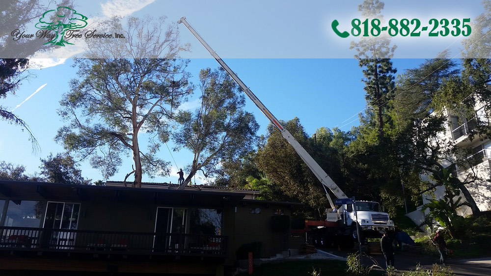 When you hire professionals to handle your tree trimming in Reseda, you will get a staff that knows the job at hand and how it should be taken care of.