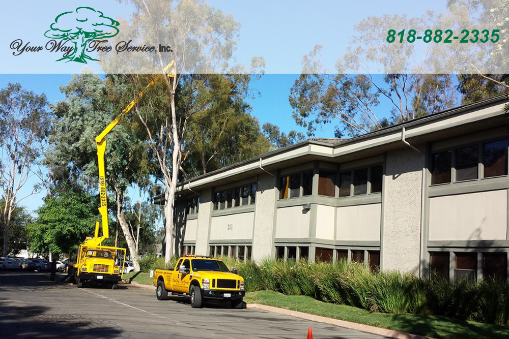 Take Care of Your Sick Trees with Our Tree Service in Reseda