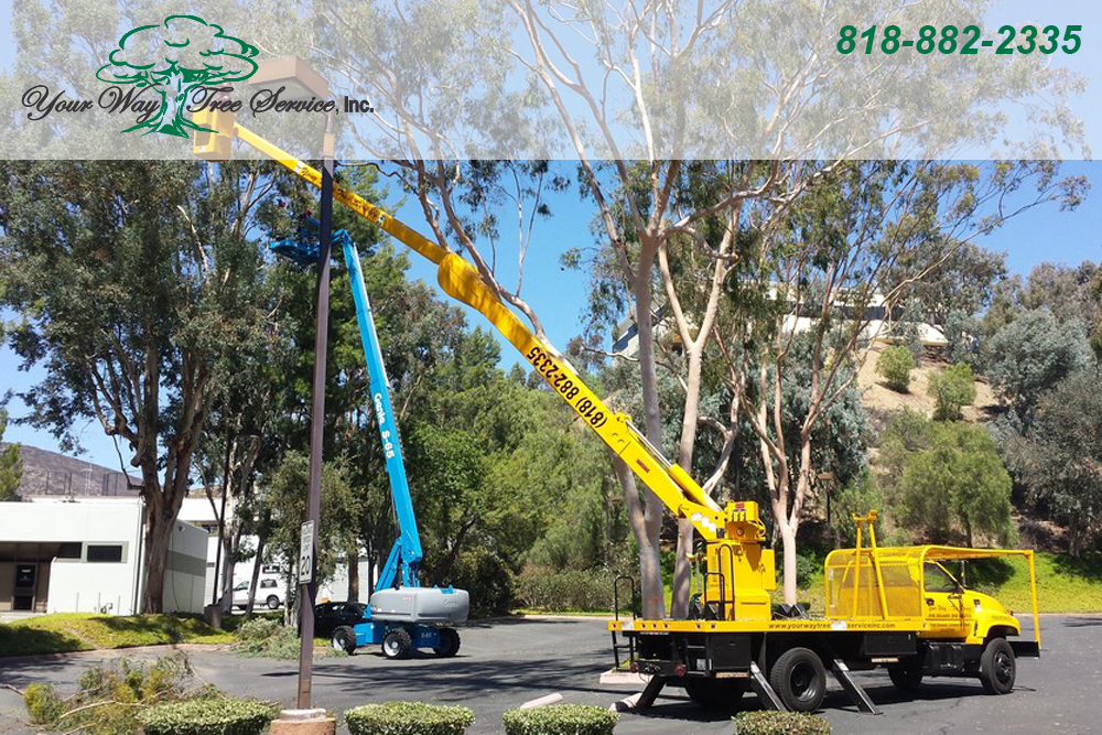 The Benefits of Professional Tree Removal in Los Angeles