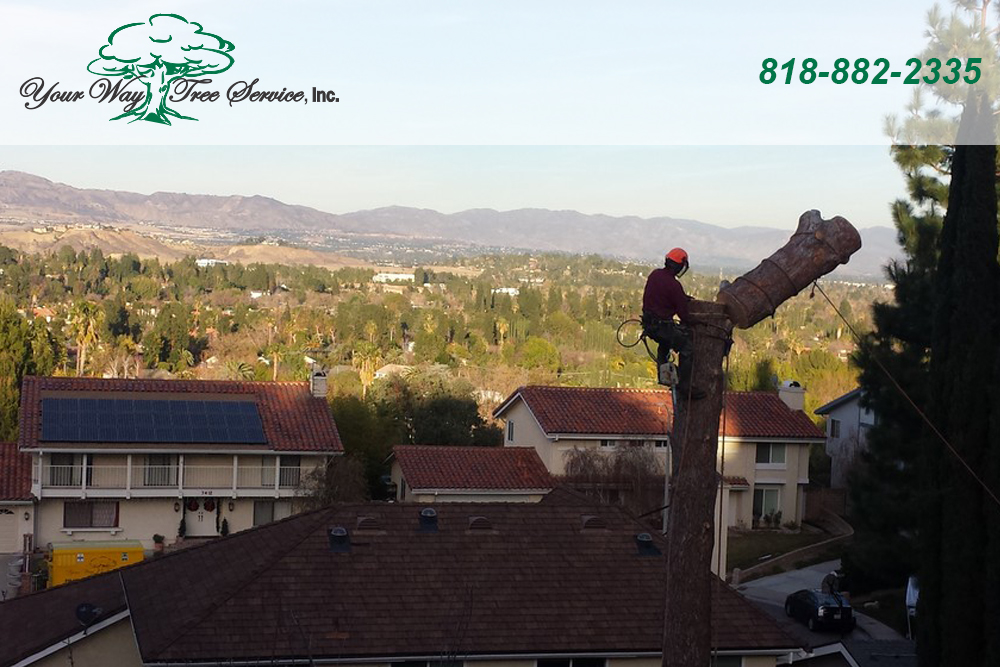 The Reasons for Tree Removal in Sherman Oaks