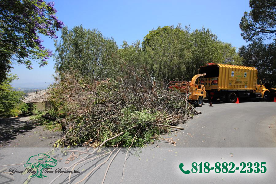 Tree Service in Brentwood is Much More Than Removal