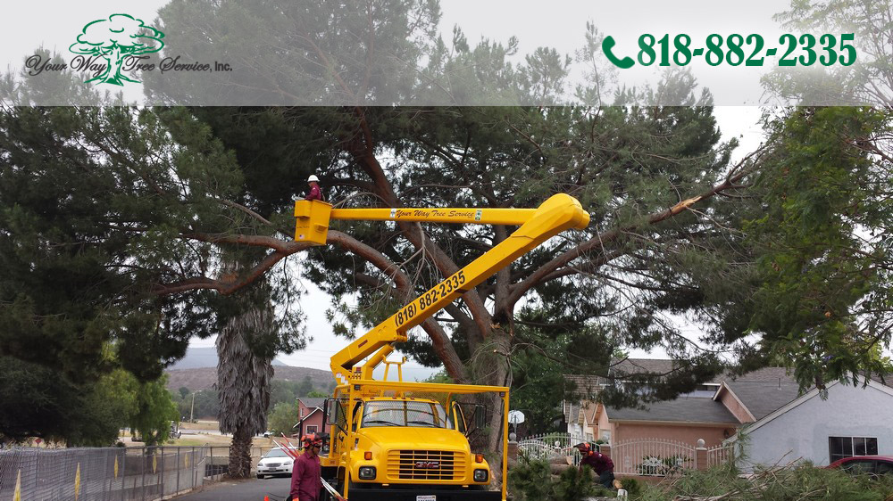 The Science of Tree Trimming in Newbury Park