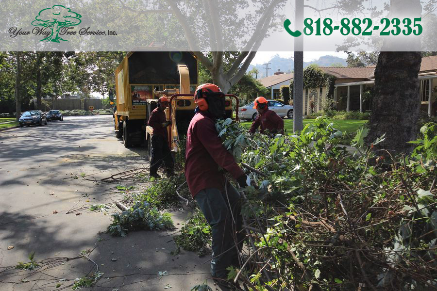 What to Know About Tree Removal in Woodland Hills