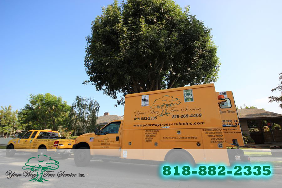 Tree Service in Brentwood